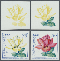 DDR: 1972, Internationale Rosenausstellung In Erfurt 35 Pf. 'Professor Knöll (Teehybride)' In 4 Verschiedenen Ungez
