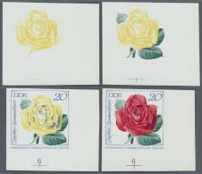 DDR: 1972, Internationale Rosenausstellung In Erfurt 20 Pf. 'Izetka Spreeathen (Teehybride)' In 4 Verschiedenen Ungez&au