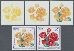DDR: 1972, Internationale Rosenausstellung In Erfurt 15 Pf. 'Charme (Polyantharose)' In 5 Verschiedenen Ungezähnten