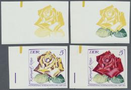 DDR: 1972, Internationale Rosenausstellung In Erfurt 5 Pf. 'Karneol-Rose (Teehybride)' In 4 Verschiedenen Ungezähnt