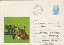 60755- LYNX, WILD CAT, COVER STATIONERY, 1973, ROMANIA