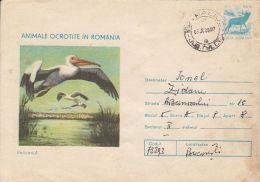 60773- PELICAN, BIRDS, COVER STATIONERY, 1980, ROMANIA