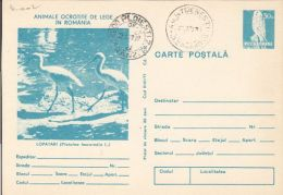 60776- SPOONBILL, KESTREL, BIRDS, POSTCARD STATIONERY, 1979, ROMANIA