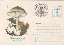 60838- MUSHROOMS, COVER STATIONERY, 1995, ROMANIA