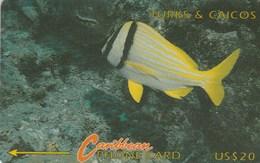 Turks And Caicos - Porkfish - 7CTCC