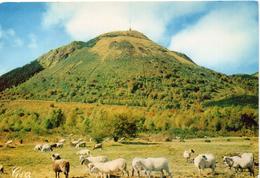 Moutons.. Animaux Troupeau De Moutons Berger Ovin Agneau Agnelle Brebis Bélier En Auvergne Le Puy-de-Dome - Autres