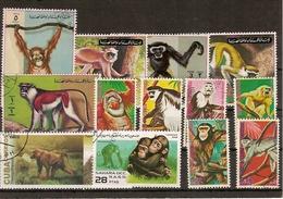 LE MONDE DES SINGES  --TOUS DIFFERENTS - Monkeys
