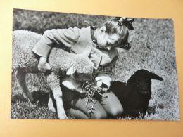 Lány Girl Madchen Lamb Sheep Bárány - Fotografie