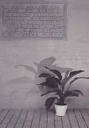 Waasmunster Abdij O.L.Vr Van Roosenberg, Fotokaart (pk36408) - Waasmunster
