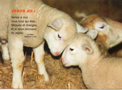 Moutons.. Animaux Troupeau De Moutons Berger Ovin Agneau Agnelle Brebis Bélier - Autres