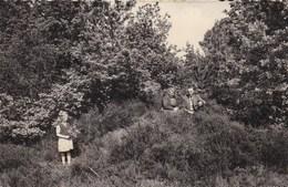As : Bos En Heide - As