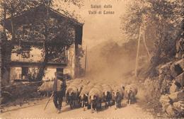 """D5929 """"(TO) SALUTI DALLE VALLI DI LANZO -  VEDUTA  PASTORE CON GREGGE""""  ANIMATA. CART  SPED 1919 - Otras Ciudades"""