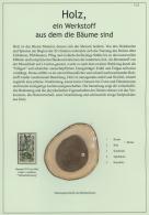 """Thematik: Holz / Wood: Ab 1835: """"HOLZ, Ein Werkstoff Aus Dem Die Bäume Sind"""": Umfangreiche Und Spezialisierte Hochp"""