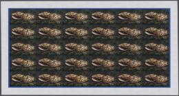 Thematik: Tiere-Meerestiere-Muscheln / Animals-sea Animals-shells: 1974, Cook Islands. Progressive Proofs Set Of Sheets