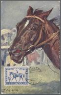 Thematik: Sport-Pferdesport / Sport Equestrian Sports: 19896/1996 Ca., Alle Welt, PFERDESPORT - Sammlung Von Ca. 1150 Be