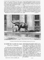 LE JARDIN DES PLANTES DE PARIS Reproduit Par La PHOTOGRAPHIE  1882 (1) - Paris
