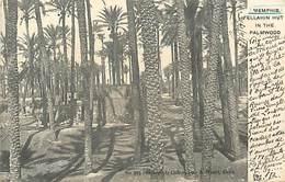 A-17.5739  :  MEMPHIS. FELLAHIN HUT IN THE PALMWOOD - Egypt