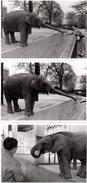 3 Photos Originales Animal De Zoo - Eléphant Venant Récupérer De La Nourriture Dans Une Main Féminine - Trompe Allongée - Persone Identificate