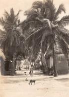 Inde Îles Laquedives Laccadive Islands Scene De Rue Ancienne Photo 1910 - Places