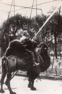 Royaume Uni Zoo De Londres Entrainement De Pompier A Chameau Ancienne Photo 1940 - Professions