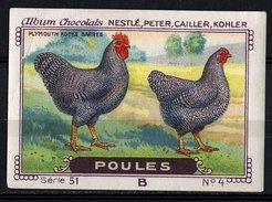 Nestlé - 51B - Poules, Chickens - 4 - Plymouth Rocks Barres