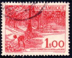 638 Mozambique Plantation Palmiers Palm Trees (M-MOZ-146)