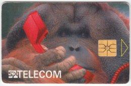 CZECH REP. C-374 Chip SPT - Animal, Monkey - Used