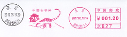 China Post Meter Dinosaur (Beijing Prehistory Animal Musuem) On Cover