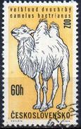 PIA - CECOSLOVACCHIA  - 1962 : 30° Anniversario Dello Zoo Di Praga  : Cammello    -  (Yv 1216 )