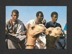 AFRIQUE - CHAMEAUX - CHAMELIERS DE LA RÉGION DU FLEUVE - PHOTO BAÏDY SOW - Cartes Postales