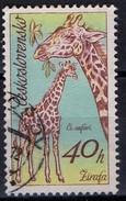 PIA - CECOSLOVACCHIA  - 1976 : Animali Africani : Giraffe  -  (Yv 1284 )