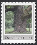 ÖSTERREICH 2013 ** 1.000-jährige Eiche In Bierbaum / ältester Baum, Umfang 8,75 Meter - PM Personalized Stamps MNH - Natur