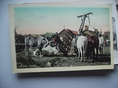 India Village Scene With Cattle - India