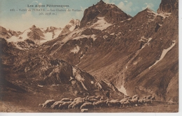 CPA Vallée De L'Ubaye - Les Glaciers Du Marinet (avec Troupeau De Moutons) - Ohne Zuordnung