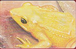 Venezuela Sapito Amarillo Kikker Grenouille Rana Frog Telefoonkaart Telecarte PHONECARD Tarjeta Telecard TELEFONKARTE - Giungla
