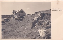 Turistovski Dom Na Plesivcu 1696 M * 15. VII. 1937 - Slovenia