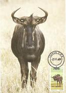 SWA NAMIBIA Namibie Carte Maximum GNOU Oblitéré