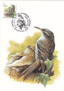 C.M. Buzin - Grimpereau Des Jardins  - FDC - Timbre N° 2919 - 1985-.. Pájaros (Buzin)