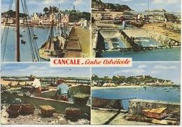Cancale Centre Ostréicole : Le Port De La Houle Et Les Parcs à Huitres (n°35/1002 Cp Vierge) - Fishing