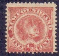 NEWFOUNDLAND 1887 Newfoundland Dog ½c. Rose-red, VF MNH, MiNr 35a, SG 49 - Newfoundland