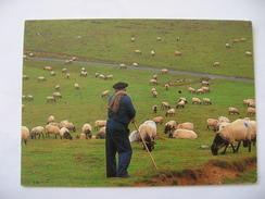 Pays Basque Berger 1992 - Elevage