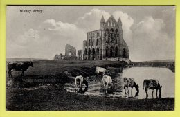 Yorkshire - Whitby, Abbey - Postcard - 1913 - Whitby