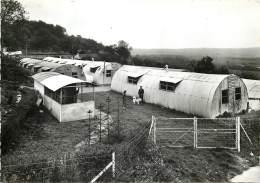 Anhée - Arbre-Bioul - S.A. BELGOLAP - Vue Partielle De L' élevage