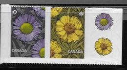 Canada 2017,  Daisy: Yellow Lakeside Lavendar, Fleabane  Pair From Booklet