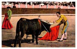 14518   Bull Fighting   After Killing - Corrida