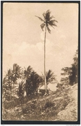East Portuguese Timor - Um Coqueiro Altíssimo - Lautem ( 2 Scans) - Timor Oriental