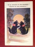 Chat Au Clair De Lune Moonlight - Chats