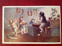 Chat Cuisinier - Gatti