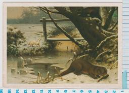 Oude Schoolplaten Van M.A. Koekkoek (1873-1944) Roofdieren In De Winter - Italy