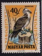 PIA - UNGHERIA :  1962 : Posta Aerea - Uccelli Da Preda - Falco Pescatore - (Yv 251) - Posta Aerea